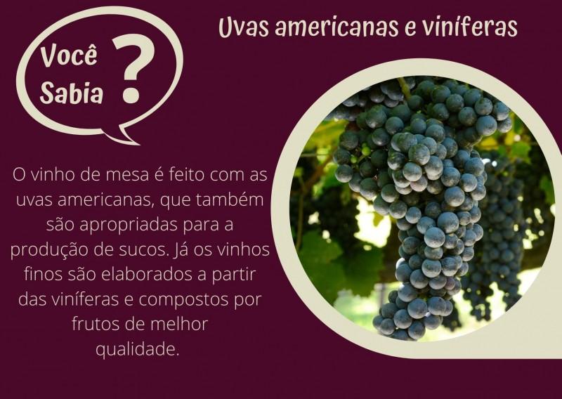 Foto de capa Uvas americanas e viníferas