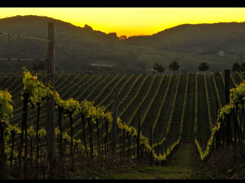 Foto Primeira safra de vinhos com Selo IP Altos Montes recebe certificação