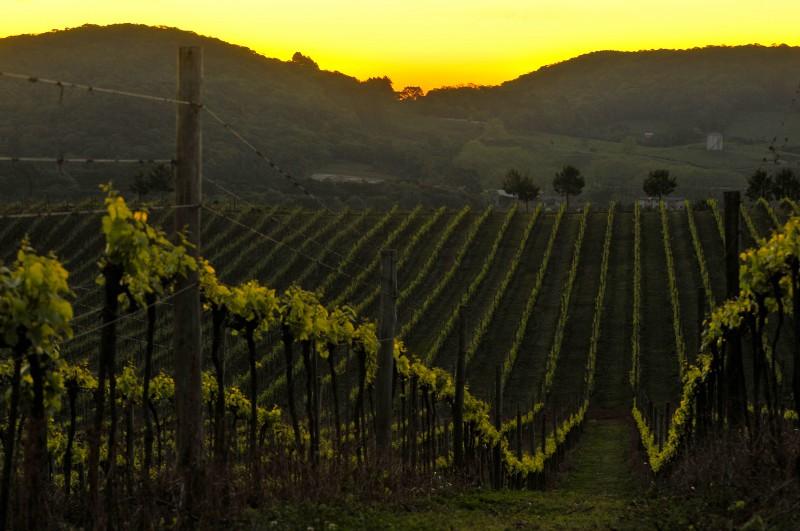 Foto de capa Primeira safra de vinhos com Selo IP Altos Montes recebe certificação