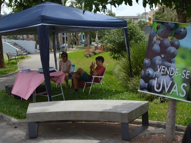 Foto Inicia a comercialização de uvas na Praça da Bandeira