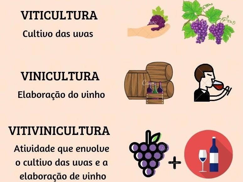 Foto Você sabia qual a diferença entre Vinicultura, Viticultura e Vitivinicultura?