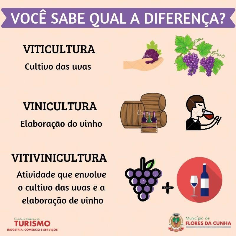 Foto de capa Você sabia qual a diferença entre Vinicultura, Viticultura e Vitivinicultura?