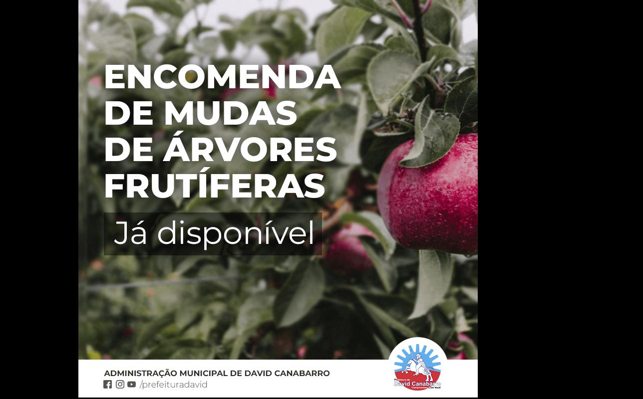 Foto de capa da notícia: Encomendas de Árvores Frutíferas