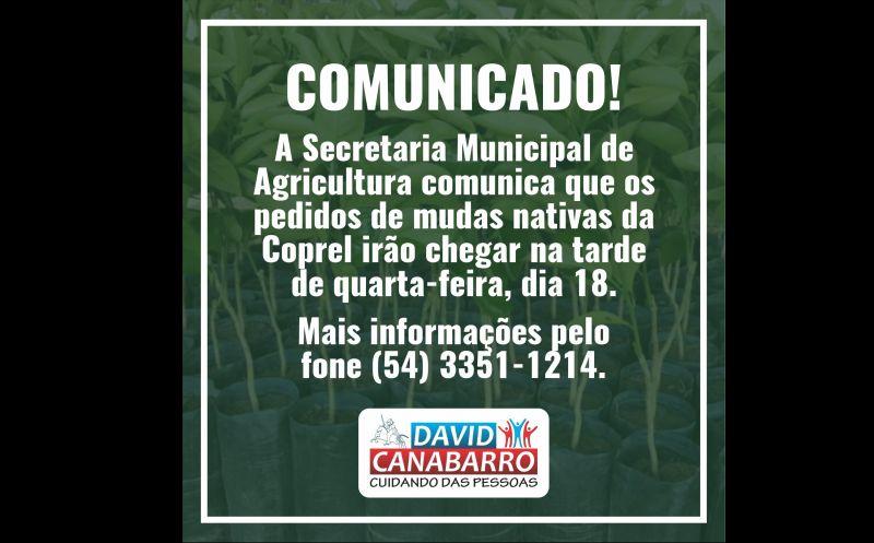 Foto de capa da notícia PEDIDOS DE MUDAS DA COPREL