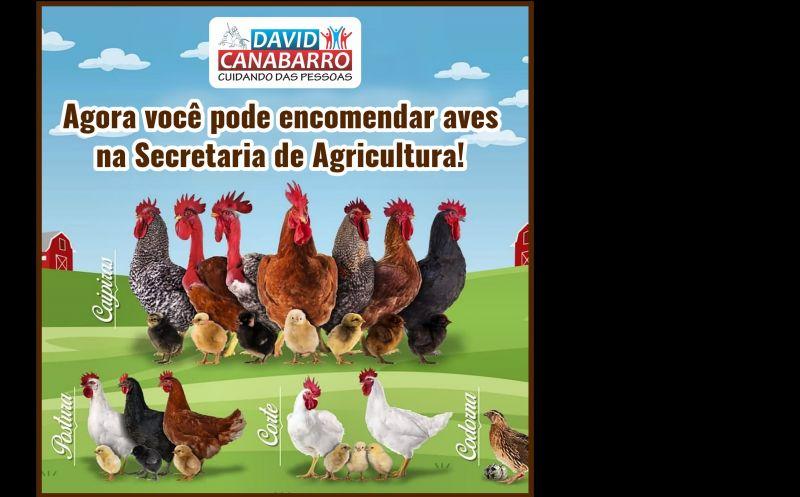Foto de capa da notícia PEDIDOS DE AVES PODEM SER FEITOS NA SECRETARIA DE AGRICULTURA