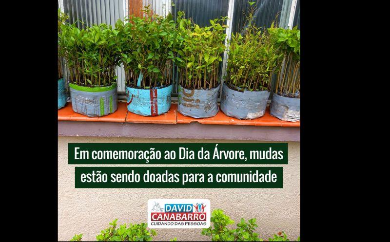 Foto de capa da notícia EM COMEMORAÇÃO AO DIA DA ÁRVORE, MUDAS ESTÃO SENDO DOADAS PARA A COMUNIDADE