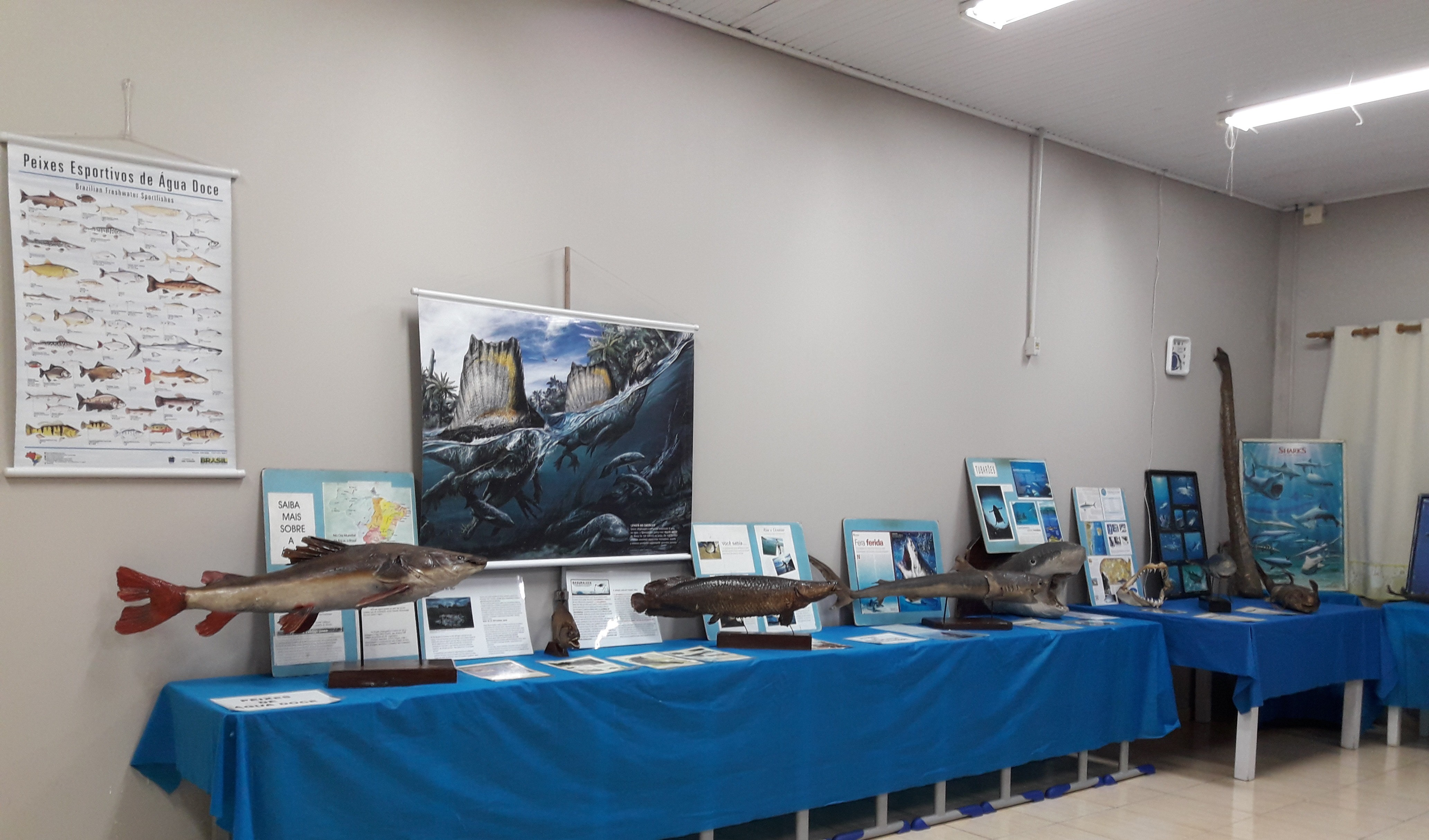 """Foto de capa da notícia: Escola Municipal Imaculada Conceição promove exposição """"Museu Marinho Itinerante"""""""