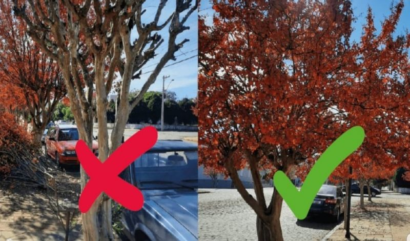 Foto de capa da notícia: Arborização é qualidade de vida!