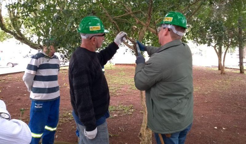 Foto de capa da notícia: Podas de árvores serão realizadas de maio a agosto em todos os bairros de Guaporé