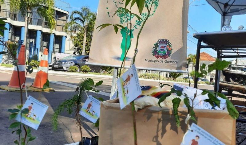 Foto de capa da notícia: 500 mudas de árvores nativas entregues pela Secretaria de Meio Ambiente em Guaporé