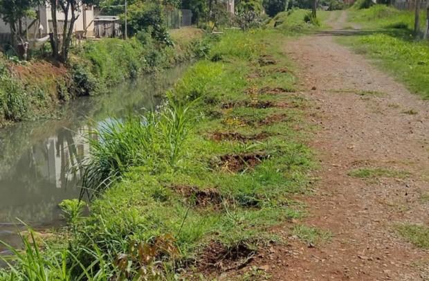 Foto de capa da notícia: Vândalos arrancam mudas de árvores plantadas às margens do Arroio Barracão em Guaporé