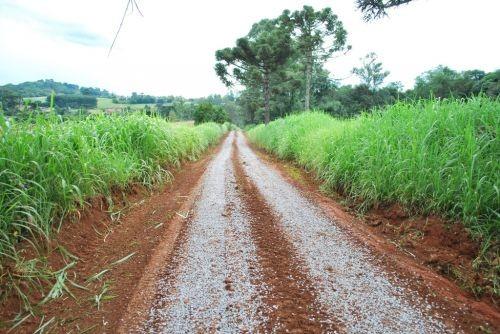 Foto de capa da notícia: Pelo Interior de Guaporé