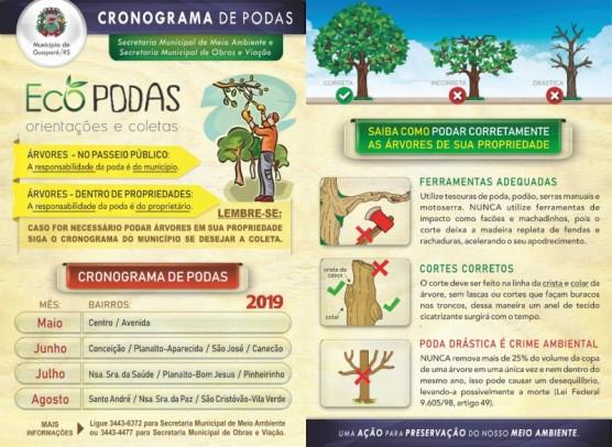 Foto de capa da notícia: Secretaria de Meio Ambiente divulga orientações sobre podas de árvores