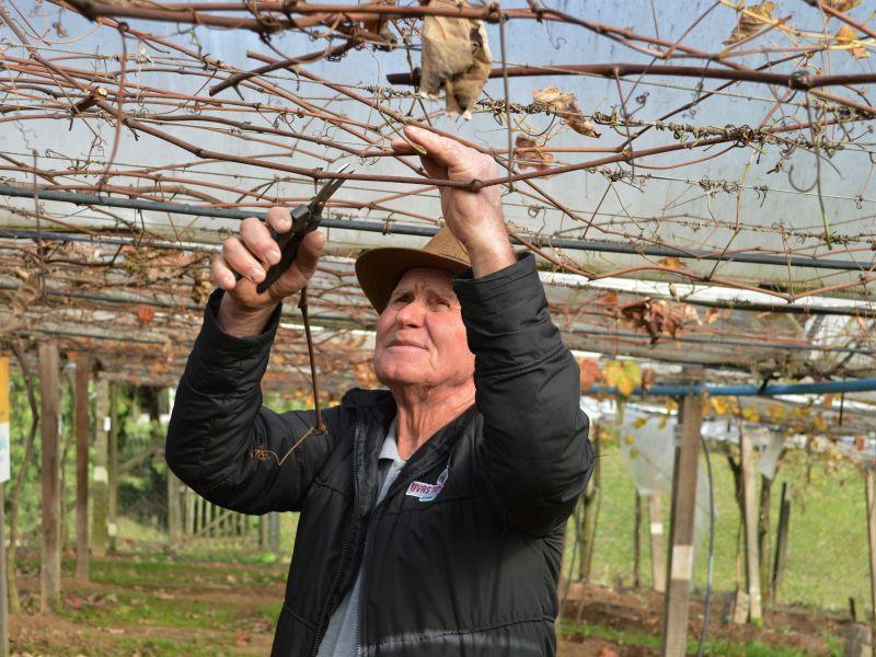 Foto de capa da notícia José Tomazzoni será reconhecido como Agricultor Destaque