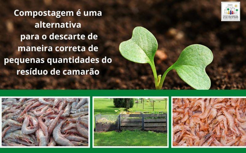 Foto de capa da notícia A compostagem é uma alternativa para o descarte de pequenas quantidades do resíduo de camarão