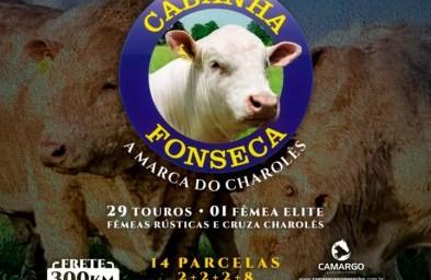 Leilão Cabanha Fonseca