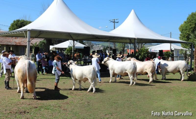 Foto de capa Com a maior representação ente os bovinos de corte, Charolês brilhou na ExpoLages 2019