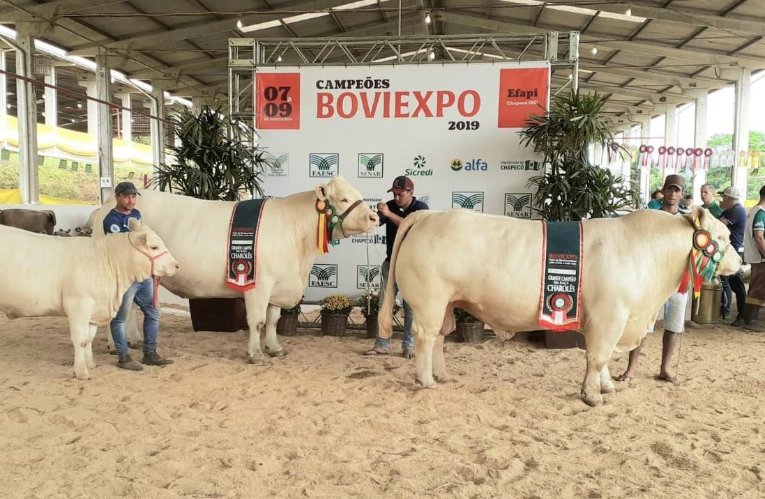 Foto da notícia Julgamento na Boviexpo / Efapi em Chapecó (SC) reuniu 30 animais Charolês