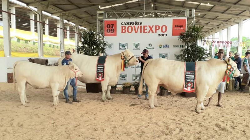 Foto de capa Julgamento na Boviexpo / Efapi em Chapecó (SC) reuniu 30 animais Charolês