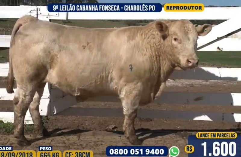 Foto Cabanha Fonseca obtém R$ 15.800 de média para touros em seu 9º leilão