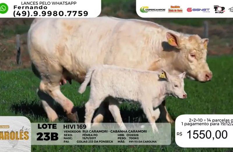 """Foto Leilão """"Branco de Charolês"""", das Cabanhas Santa Tecla e Caramori fatura mais de R$ 515 mil"""