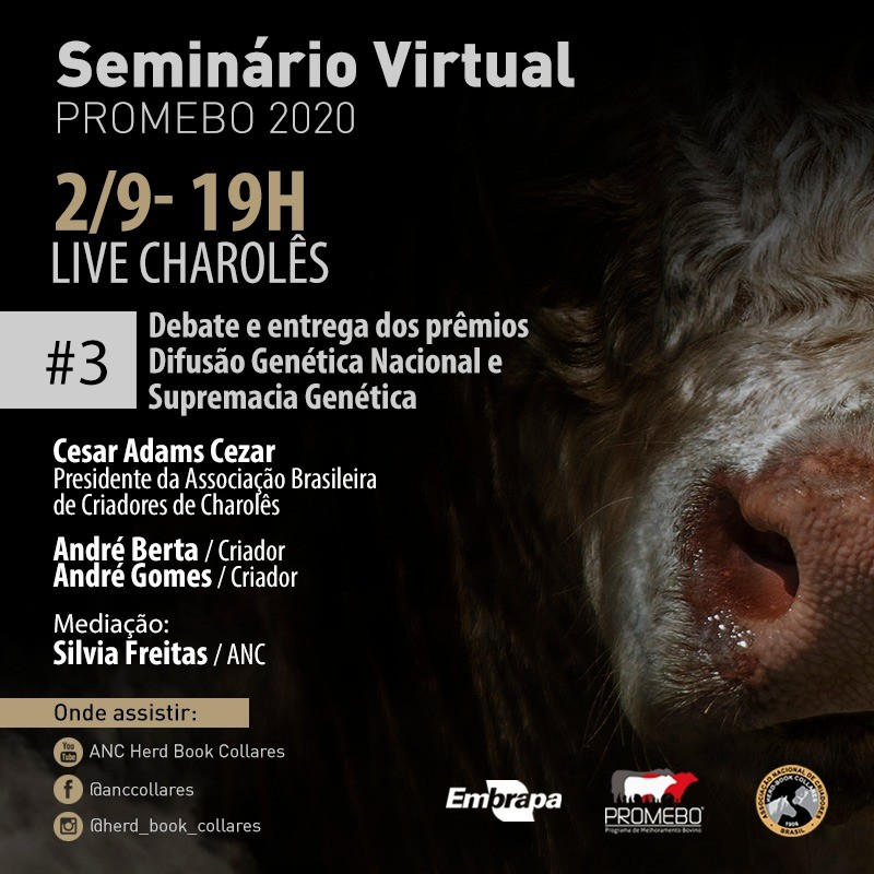 Foto de capa Charolês é foco de live do Promebo nesta quarta-feira, 02/09