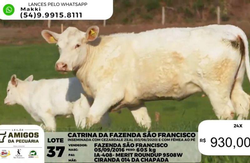 Foto Leilão Amigos da Pecuária registra média de R$ 17,2 mil para fêmeas e de R$ 14,4 mil para machos Charolês