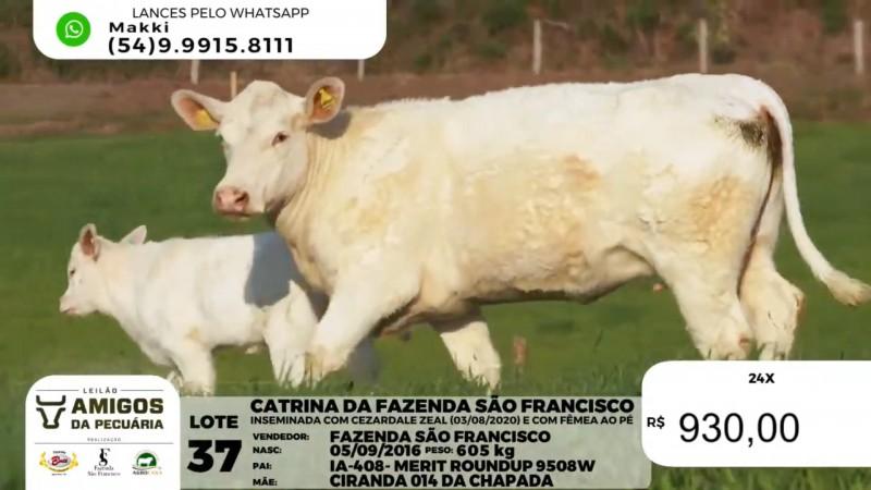 Foto de capa Leilão Amigos da Pecuária registra média de R$ 17,2 mil para fêmeas e de R$ 14,4 mil para machos Charolês