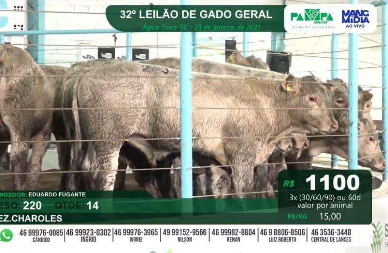 Foto da notícia Terneiros Charolês são comercializados pela média de R$ 3.570 em Água Doce/SC