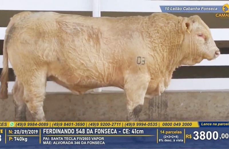 Foto da notícia Leilão da Cabanha Fonseca registra crescimento de 30% na média de touros Charolês