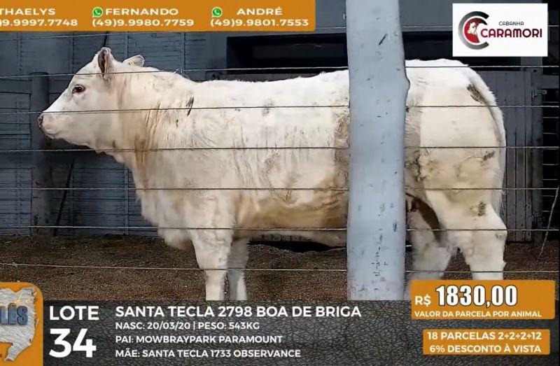 """Foto da notícia Com excelente valorização das fêmeas, Leilão """"Branco de Charolês"""" também comercializou prenhezes e touros em Caçador/SC"""