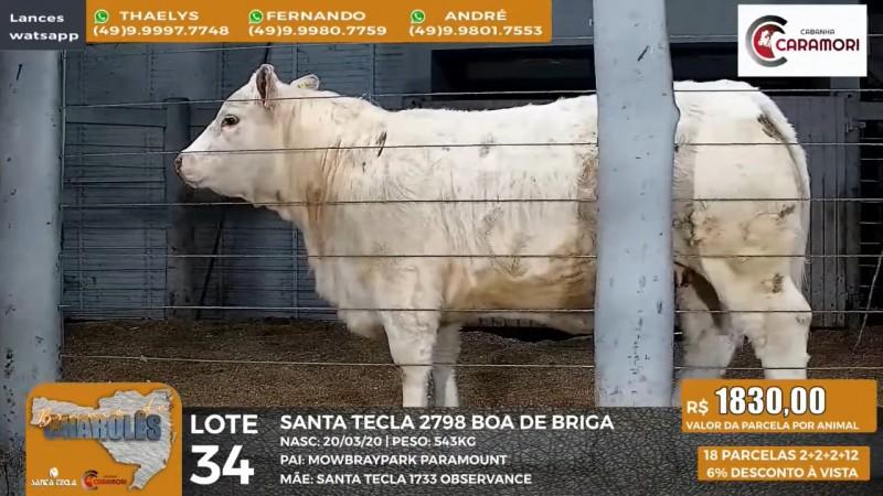 """Foto de capa Com excelente valorização das fêmeas, Leilão """"Branco de Charolês"""" também comercializou prenhezes e touros em Caçador/SC"""