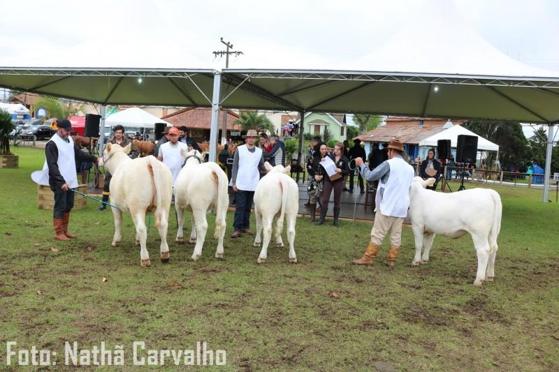 Foto de capa Charolês participa de exposições em Santa Catarina e no Paraná nos próximos dias