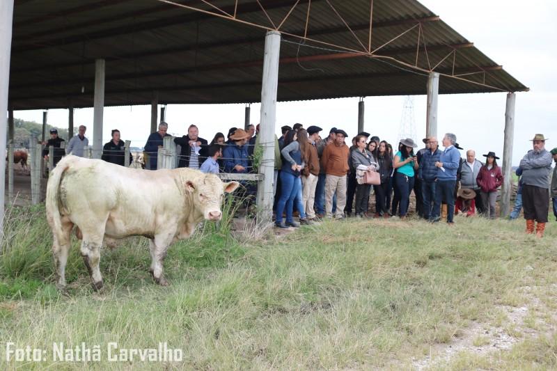 Foto de capa Com ganho médio diário de 1,450kg a pasto, Charolês encerra 2ª prova de avaliação a campo (PAC) e de consumo alimentar residual (CAR) na Embrapa