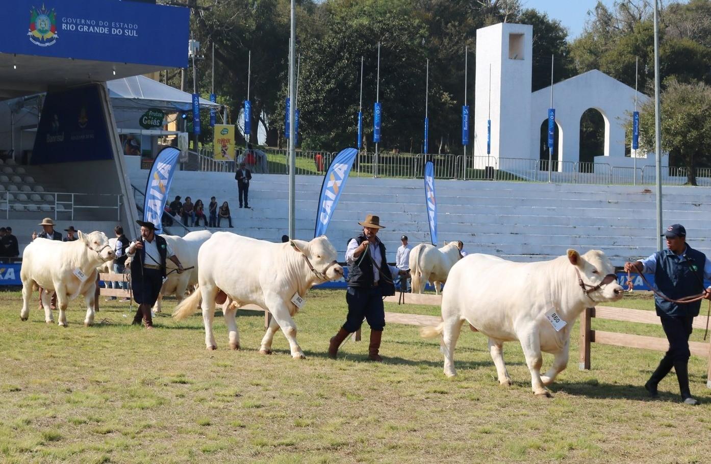 Foto Charolês inova e traz exposição específica de animais participantes de provas de desempenho para a Expointer 2019