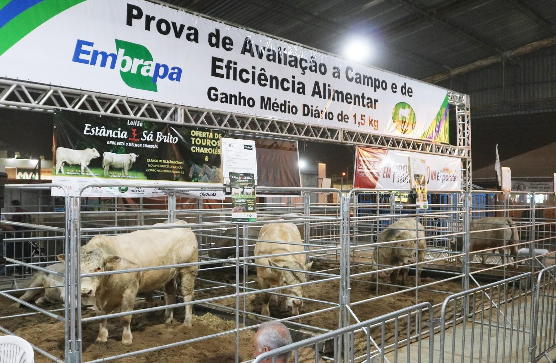 Foto da notícia Charolês celebra boa fase e lança novo modelo de exposição de bovinos na Expointer 2019
