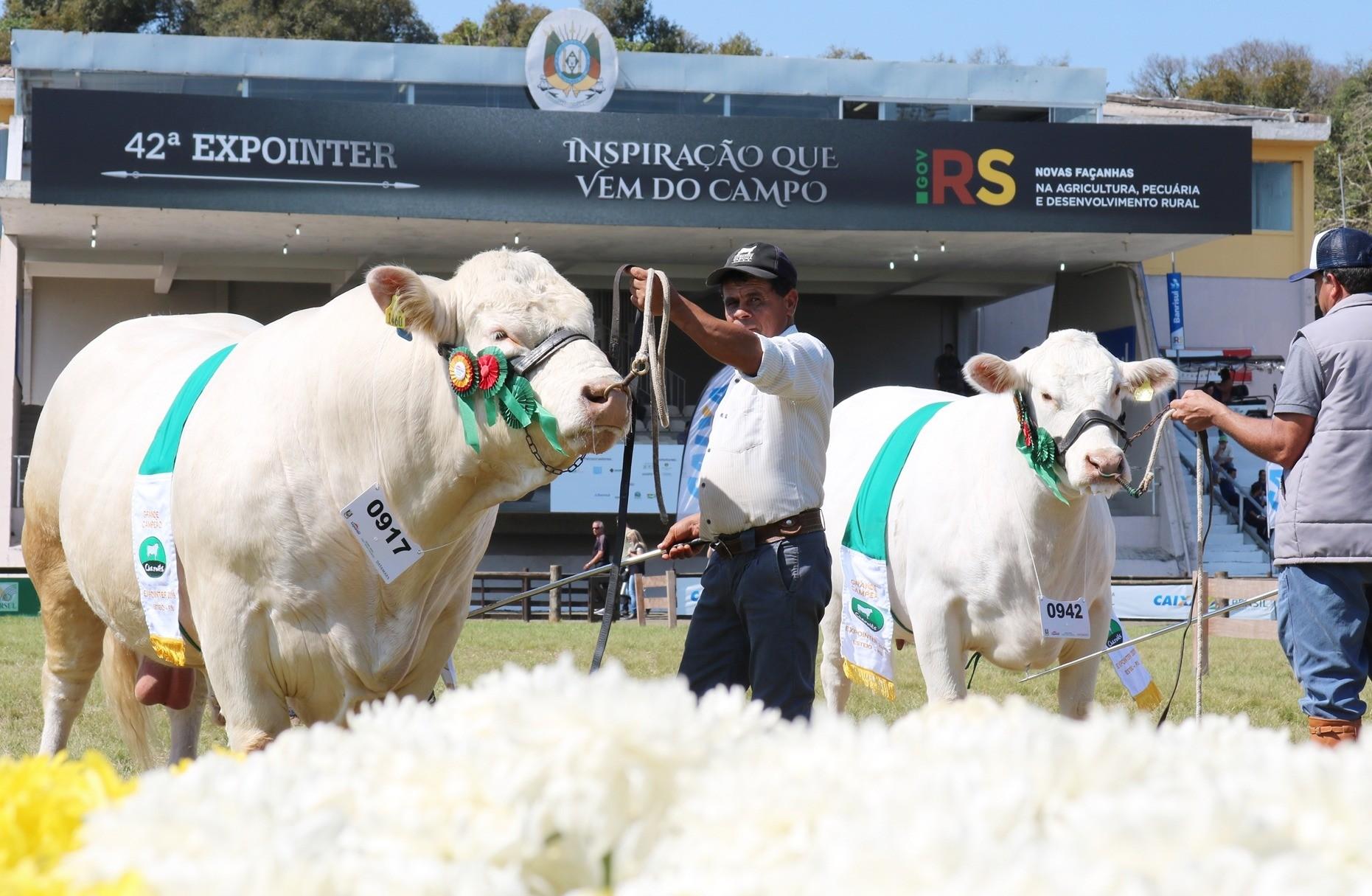 Foto Confira o resultado completo do julgamento do Charolês na Expointer 2019