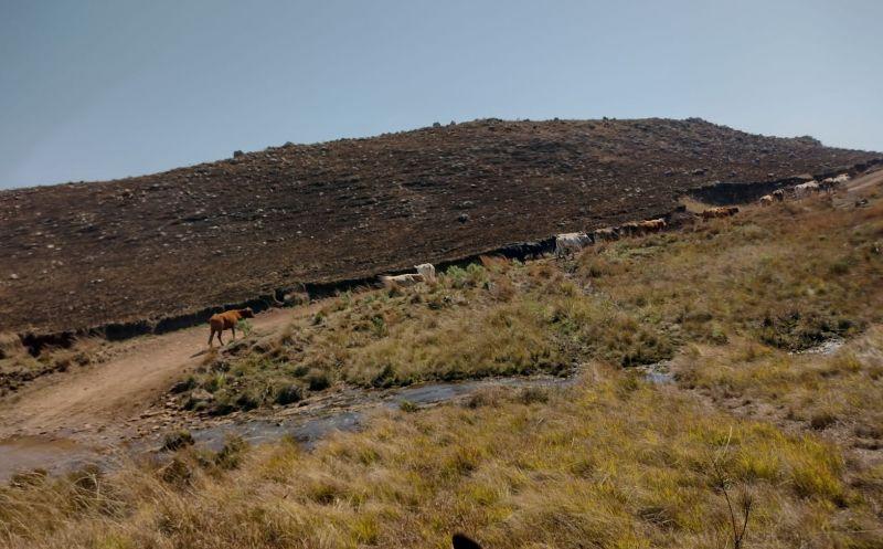 Foto de capa da notícia Queima controlada de campo depende de autorização da Secretaria de Meio Ambiente