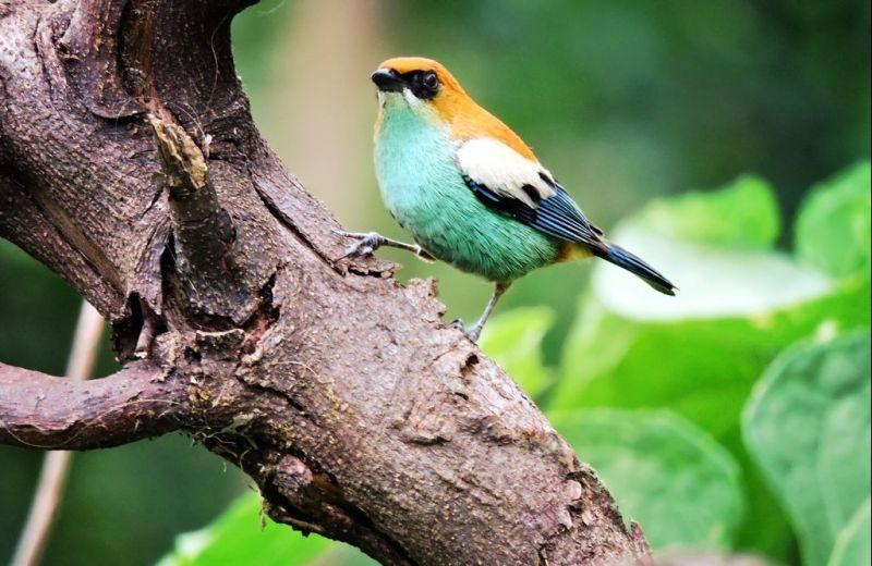 Foto Inscrições para a Caminhada Observação de Pássaros segue até esta sexta-feira