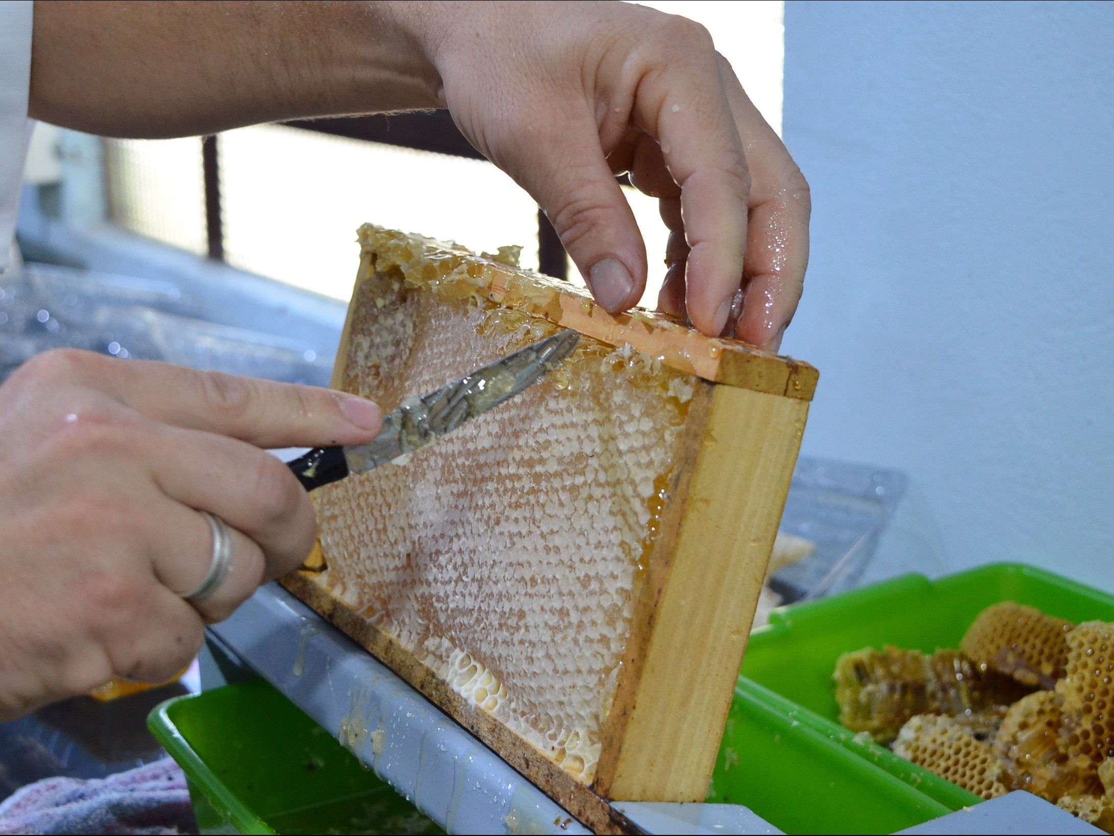 Foto de capa da notícia: Nova Petrópolis incentiva formalização de agroindústrias