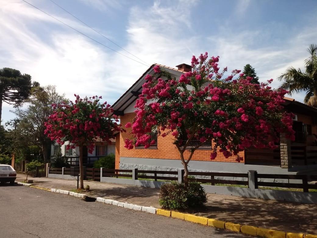 Foto de capa da notícia: Arborização urbana traz colorido e sombra às ruas de Nova Petrópolis