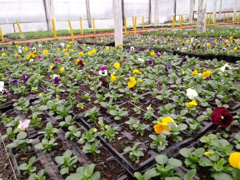 Foto de capa da notícia: Melhorias no Horto Municipal refletem nos jardins de Nova Petrópolis