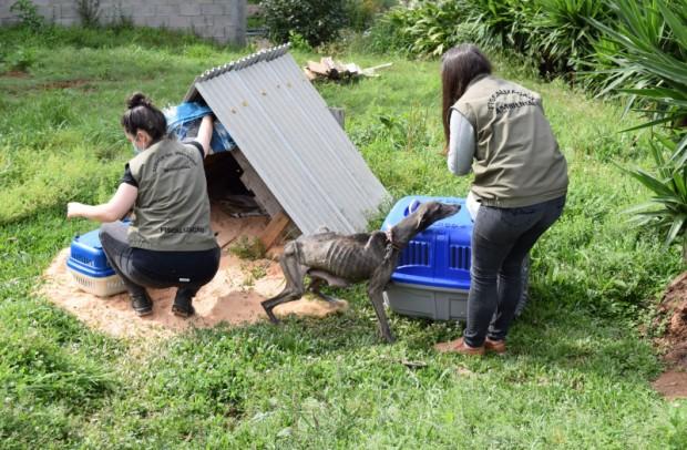 Foto de capa da notícia: 12 cães em situação de maus tratos são apreendidos em Nova Petrópolis