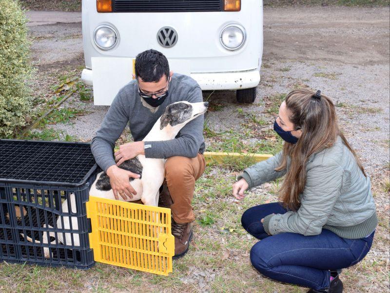 Foto de capa da notícia: Cães galgos começam a ser entregues para adotantes