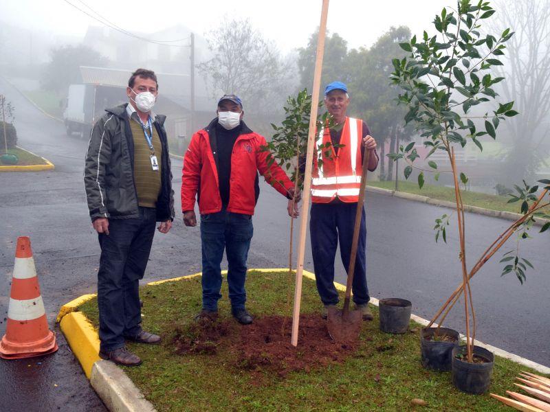 Foto de capa da notícia: Avenidas 3 de Maio e Padre Affonso Theobald recebem arborização