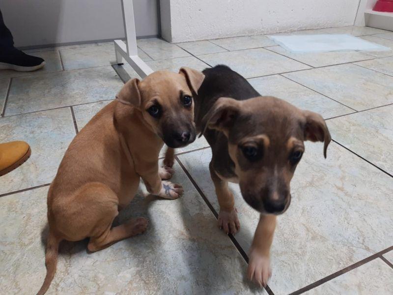 Foto de capa da notícia: Onze cães resgatados pela Prefeitura estão disponíveis para adoção