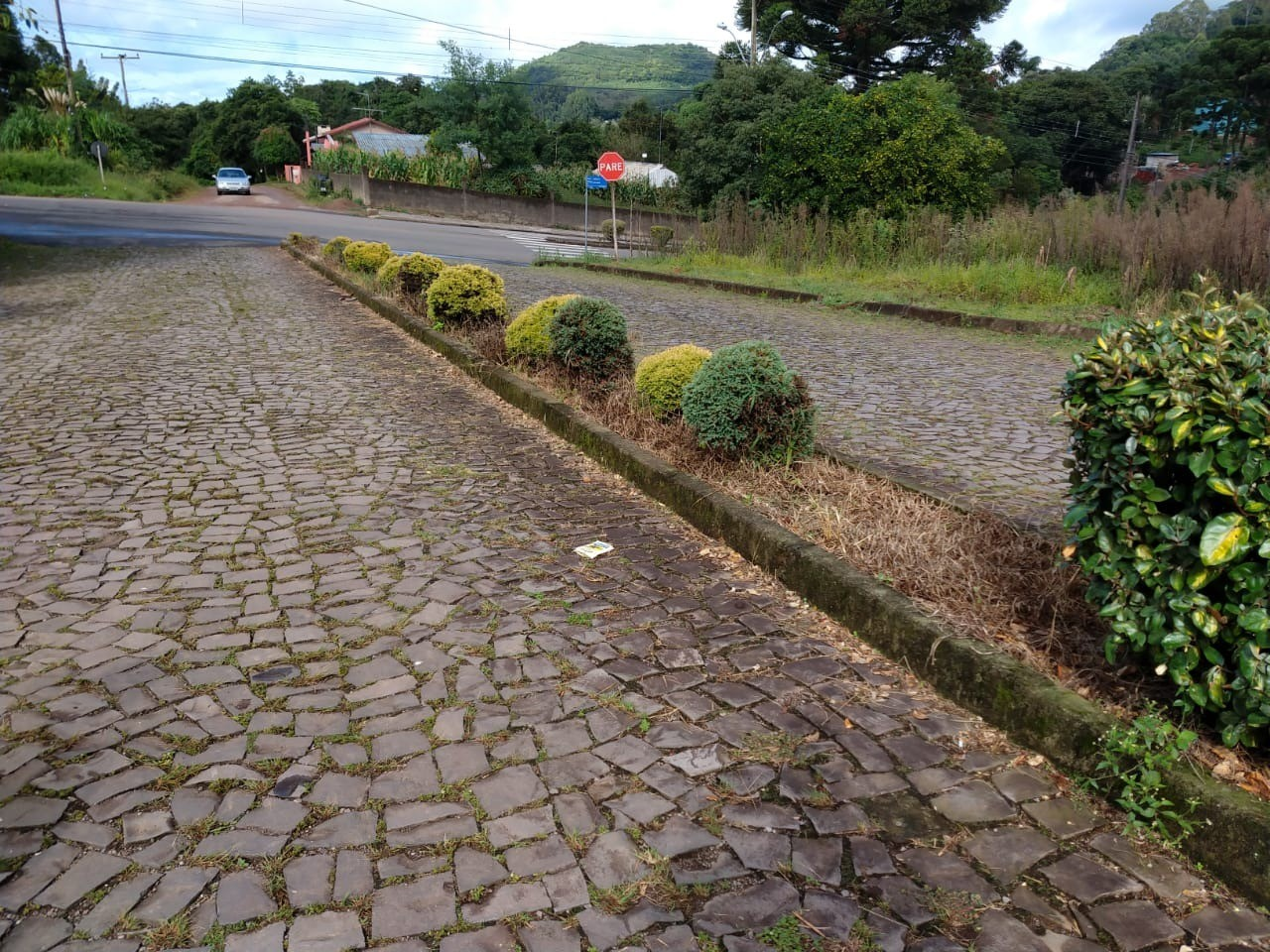 Foto de capa da notícia: Horto Municipal revitaliza canteiros das avenidas da Vila Germânia