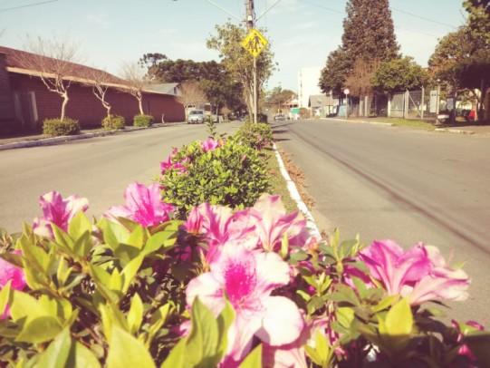 Foto de capa da notícia: Floração das azaleias embeleza ruas de Nova Petrópolis