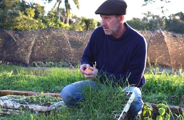 Foto de capa da notícia: Pequeno produtor diversifica renda com a cebola