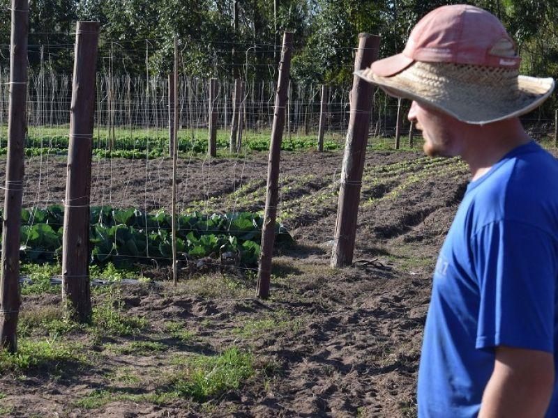 Foto de capa da notícia: Produção de hortaliças em maior escala no município